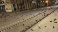 döda fåglar rom